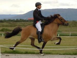 Svipall IS2004188504 frá Torfastöðum